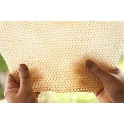 plaster wosku pszczelego