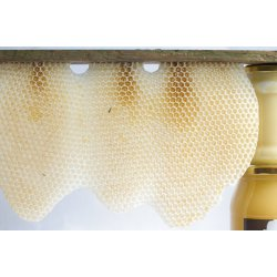 dziewiczy plaster wosku pszczelego